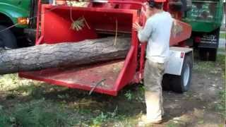 Angel Ambassadors and Deering Tree Service