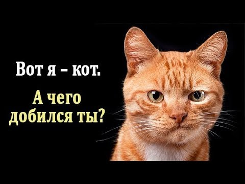 Солянка IFO - IFO смотреть онлайн в hd качестве - VIDEOOO