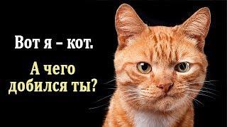 Кошки. Интересные Факты про Кошек. Что Нужно Знать о Кошках
