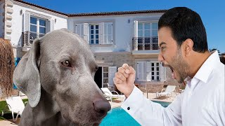 Sad Dogs  Emotional Moments Crying Dogs Tears  Dog Video Compilation