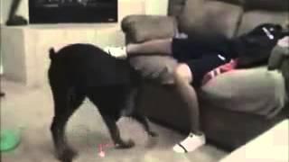 vuclip dog cut the xxx