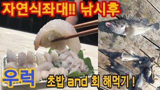 안면도 대야도 자연식 좌대 낚시후 먹방 (Rockfis…