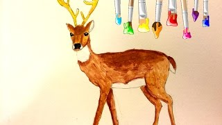 Drawing: How To Draw a Deer. Acrylic Painting. White -Tailed Deer Drawing.