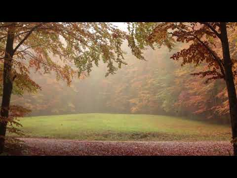 Relaxing Autumn Forest  Leaves Falling From Trees, Fog and Rain in Colorful Forest  8 Hour