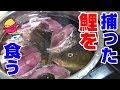 生きた鯉を解体して『鯉こく』作って見た‼ の動画、YouTube動画。