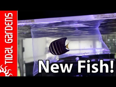 Acclimating Saltwater Fish And Inverts