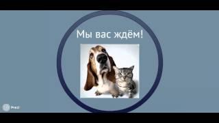 Презентация  Кружок английского языка
