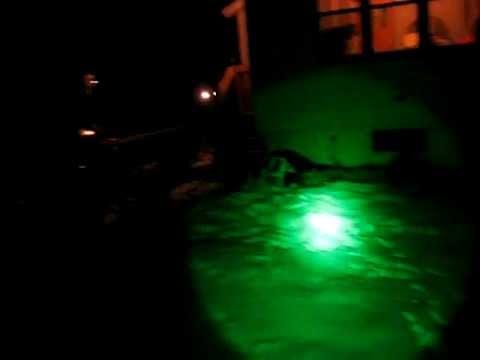 Elusive Wildlife XLR250 Green Kill Light