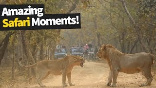 26 Incredible Safari Moments Caught on Camera