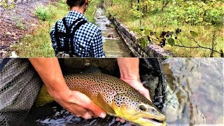 BIG 24 INCH WILD BROWN TROUT OUT OF A DITCH??