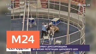 Лев напал на дрессировщика во время репетиции циркового шоу - Москва 24