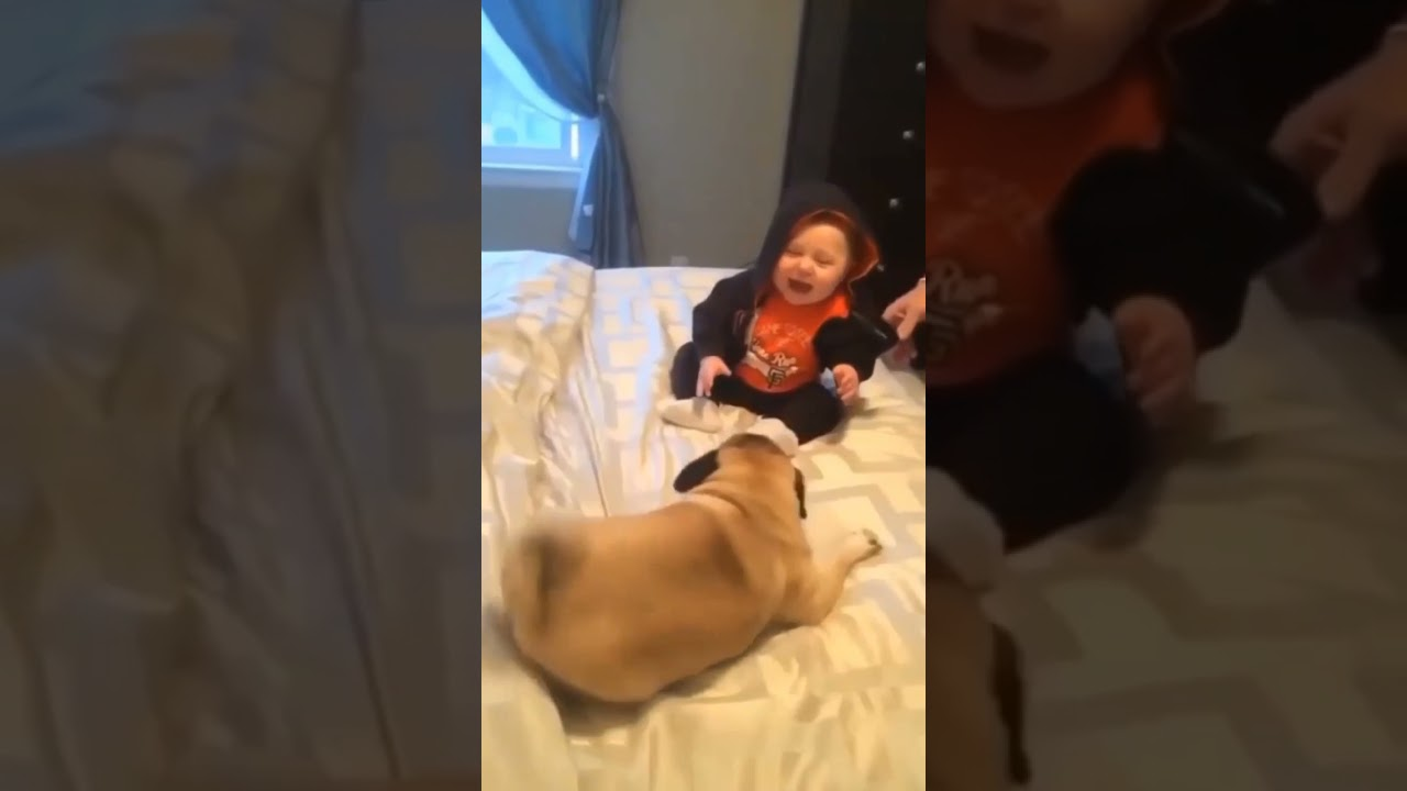 🤪 Pug dog playing with a small baby first time 🥳 funny dog vedio 😂 Family dog vedio 🤣 #short #shorts