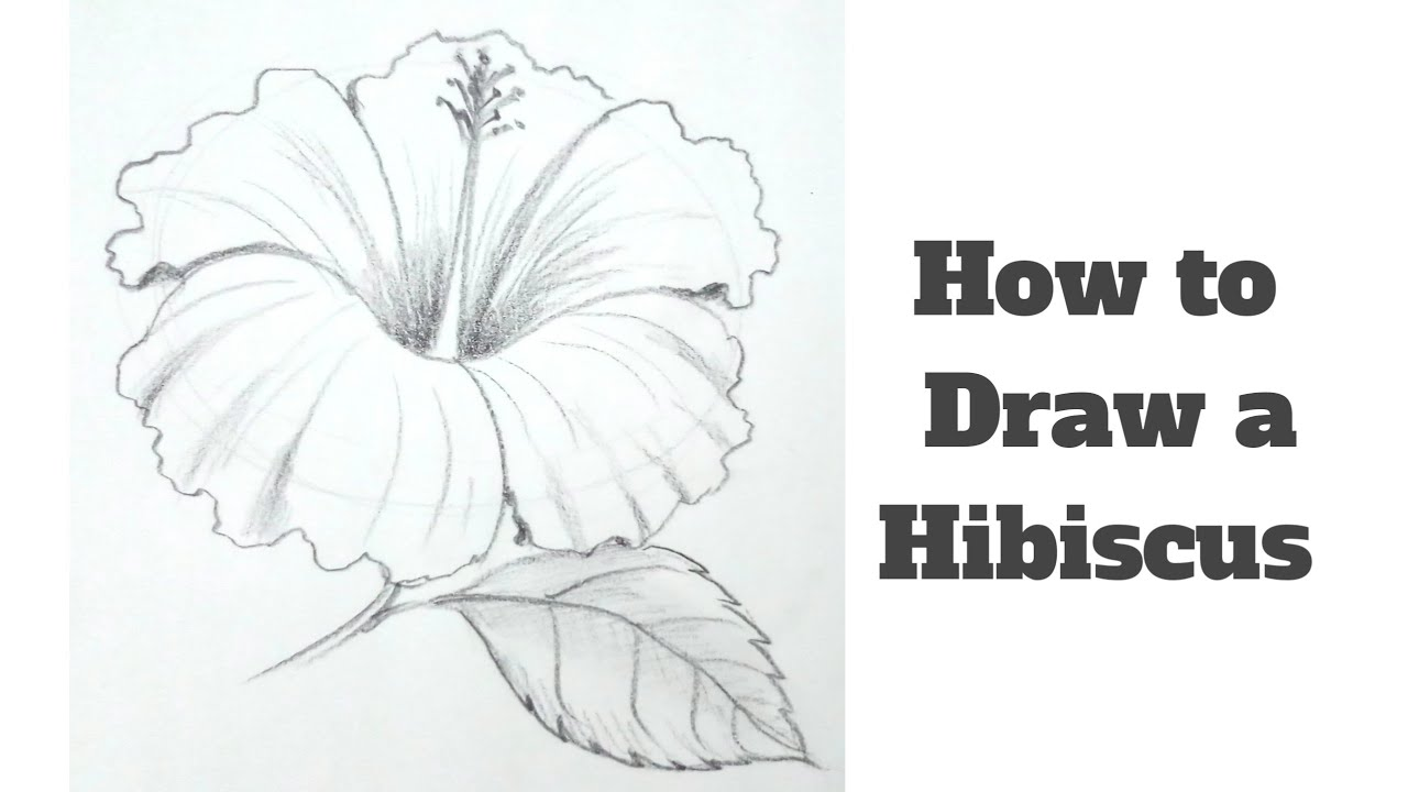 Hibiscus Flower Drawing: How To Draw A Hibiscus Flower Step By Step For Kids