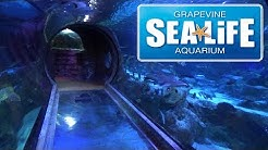SEA LIFE Grapevine Texas Aquarium Tour & Review with The Legend