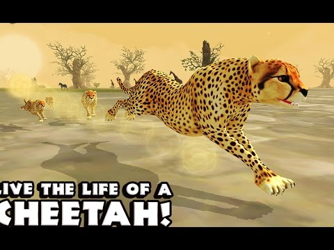 Cheetah Simulator - Симулятор гепарда на Android(Review)