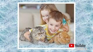 Асит терапия при аллергии на кошек на пыль на пыльцу