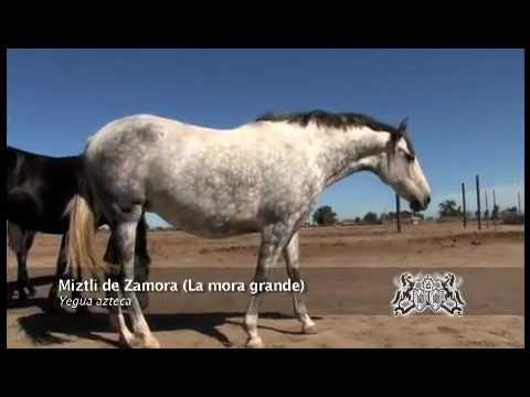 Azteca mares rancho zamora.mp4