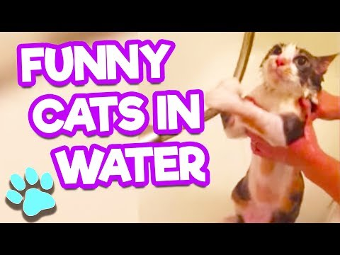 Funny Cats In Water | Cats Hate Baths | #thatpetlife