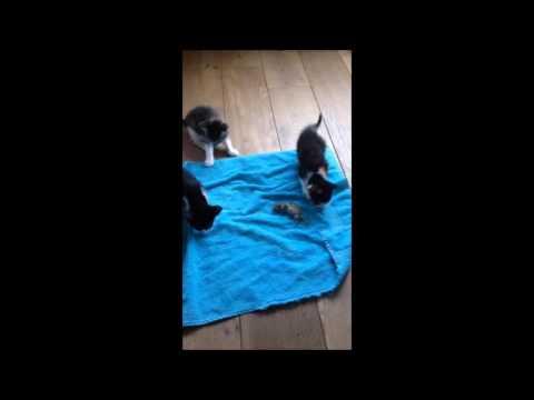 dog vs cat vs dead mouse