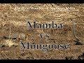 Gambar cover Mamba vs Mongoose
