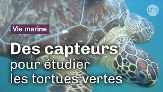 Les tortues instrumentées | Reportage CNRS