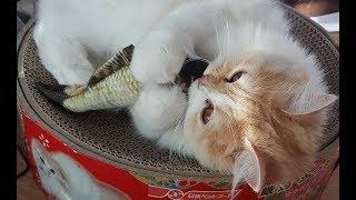 놀기도 귀찮은 고양이 마리