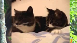Две говорящие кошки