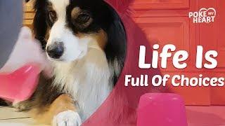 Dog Regrets Choosing Wrong Cup of Treats