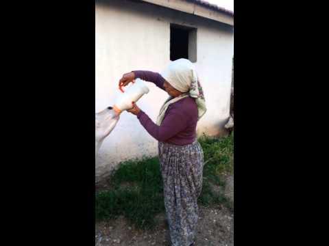 Kırşehir Kocabey Güzzel Kızları