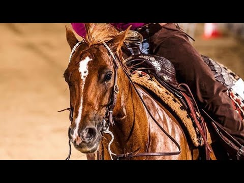 Whatever It Takes || Barrel Racing Music Video