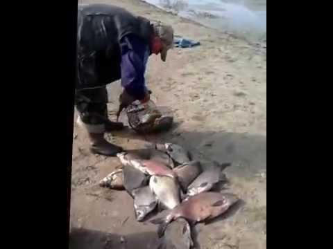 ловля на фидер в июне на реке видео