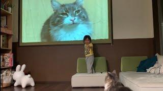 大画面に映るよく知る猫に、はしゃぐ娘と戸惑う猫 ノルウェージャンフォレストキャット My daughter frolicking at her cat on the big screen