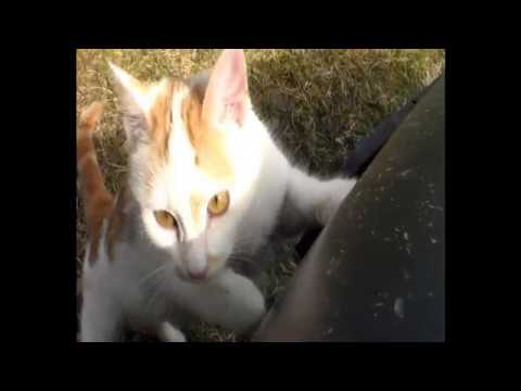 """Crtić """"Mačka i Pas"""" /Cartoon: Cat and Dog """"Catfish"""""""