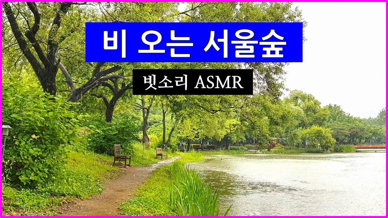 [어디갈까26] 비 오는 서울숲 빗소리 듣기 ASMR