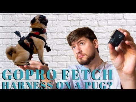 GoPro Fetch Dog Harness   Best GoPro Accessories