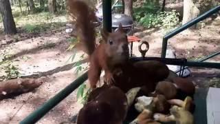 To była kiedyś całkiem dzika, leśna wiewiórka
