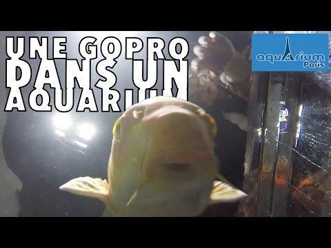 VLOG • ON A FAIT ÇA ??? Aquarium de Paris (part 2) ft. Hugo - Studio Bubble Tea