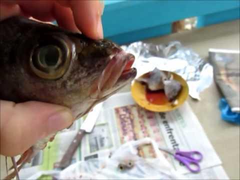 Glasseye premaxilla protrusion