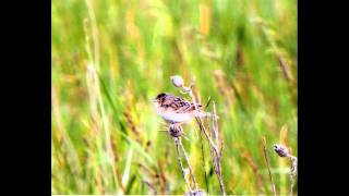 Grasslands bird tour done in Crow Lake Wind Project