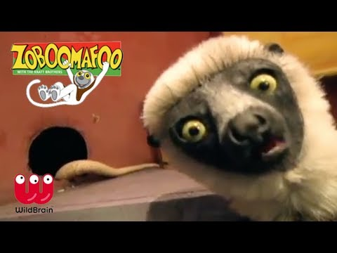 zoboomafoo- -lemur-meets-slithering-snakes- -episode-animals-for-kids