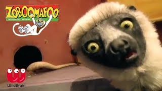 Zoboomafoo   Lemur meets slithering snakes   Episode Animals for Kids
