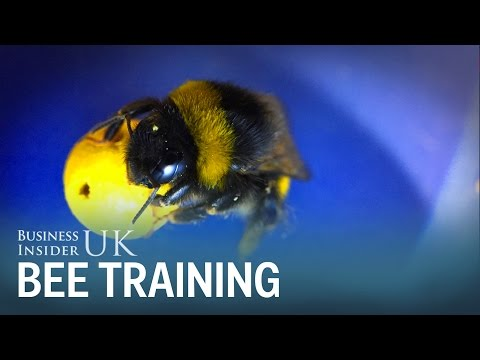 Researchers show for the first time that insects can be trained to perform complex tasks