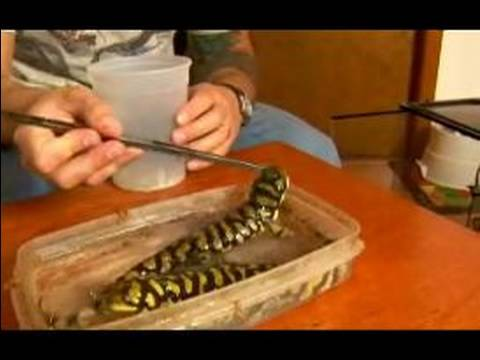 How to Care for a Pet Tiger Salamander : How to Feed Tiger Salamanders