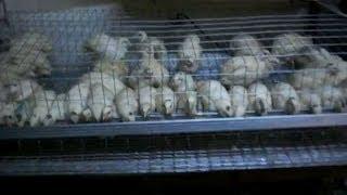 № 14 Клетка для перепелов за 45 минут. Cell for quail own hands.(Клетка для перепелов сделанная своими руками это не очень сложно и это в разы экономнее, чем покупная переп..., 2014-05-23T18:34:47.000Z)
