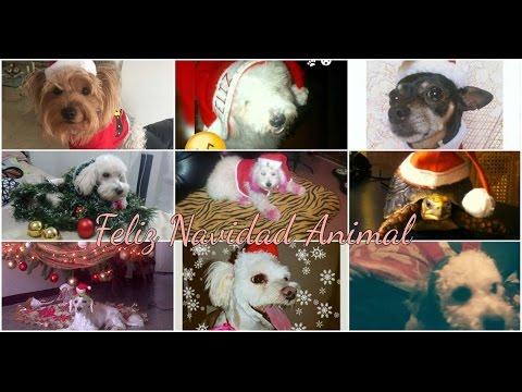 Navidad Animal | Vídeo
