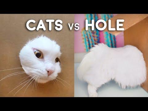 Cats vs Hole