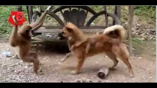 Dog Vs Monkey Funny Video  Monkey Funny Video