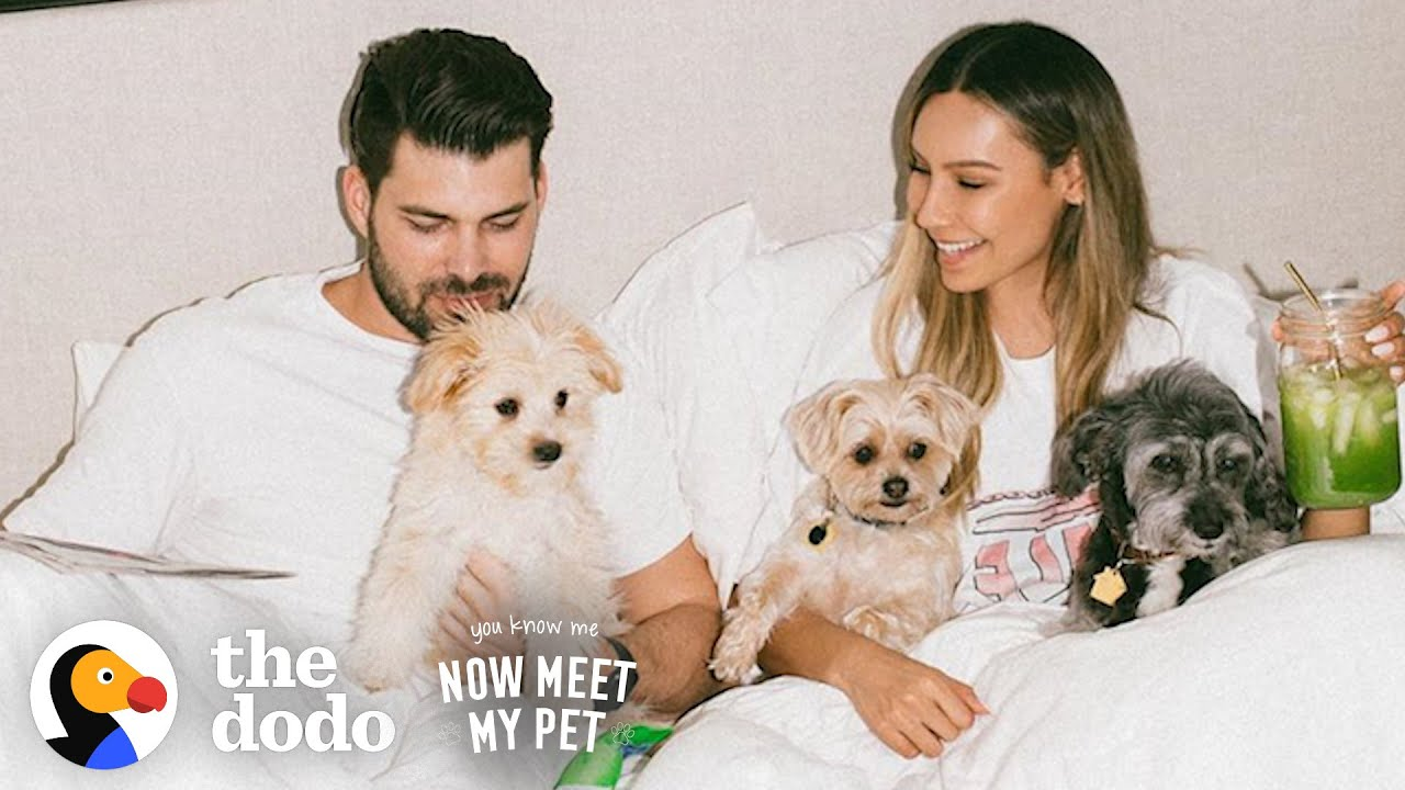 Desi Perkins Keeps Bringing Home Rescue Pups | The Dodo You Know Me Now Meet My Pet