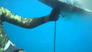 Spearfishing Ginut Travelly 50 kg (Ulua) , Oman