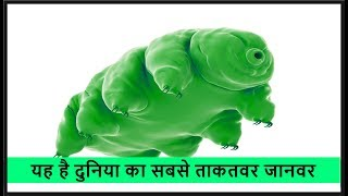 यह है दुनिया का सबसे ताकतवर जानवर | Strongest or toughest animal (TARDIGRADE) in the world in hindi
